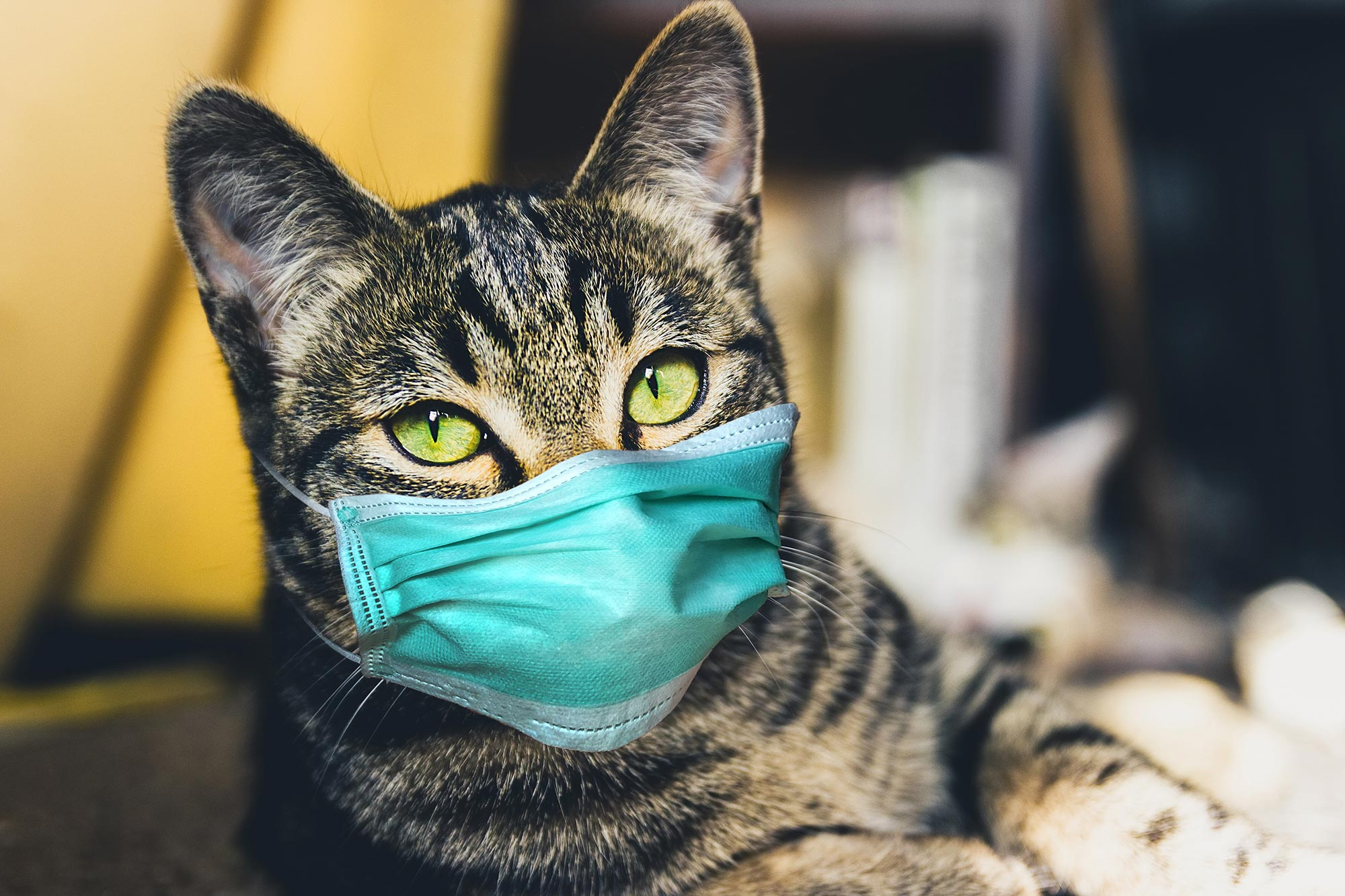 Coronavirus and its affect on Cats