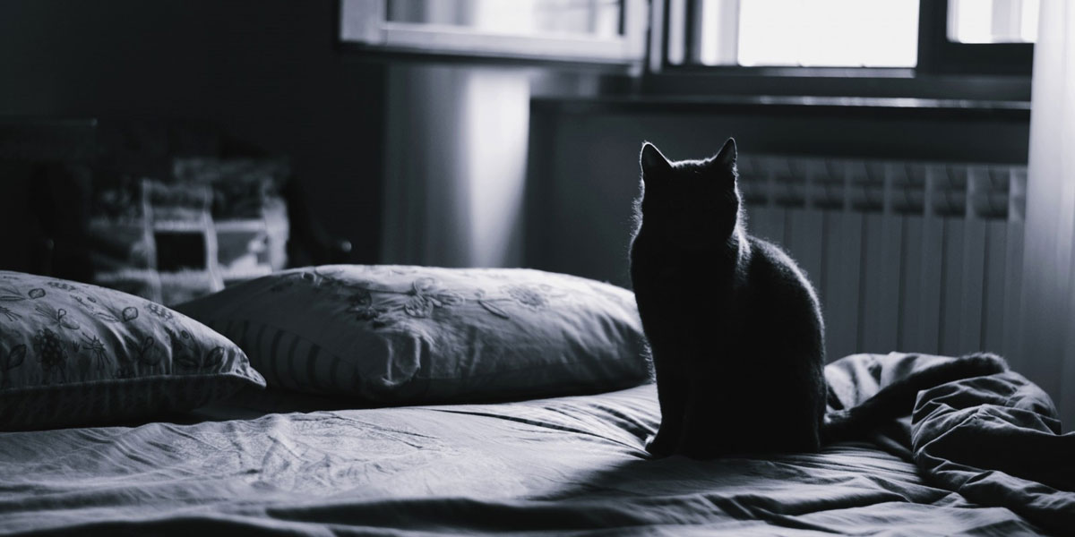 Changing Sheets with a Cat – Making an ordinary situation extraordinary!