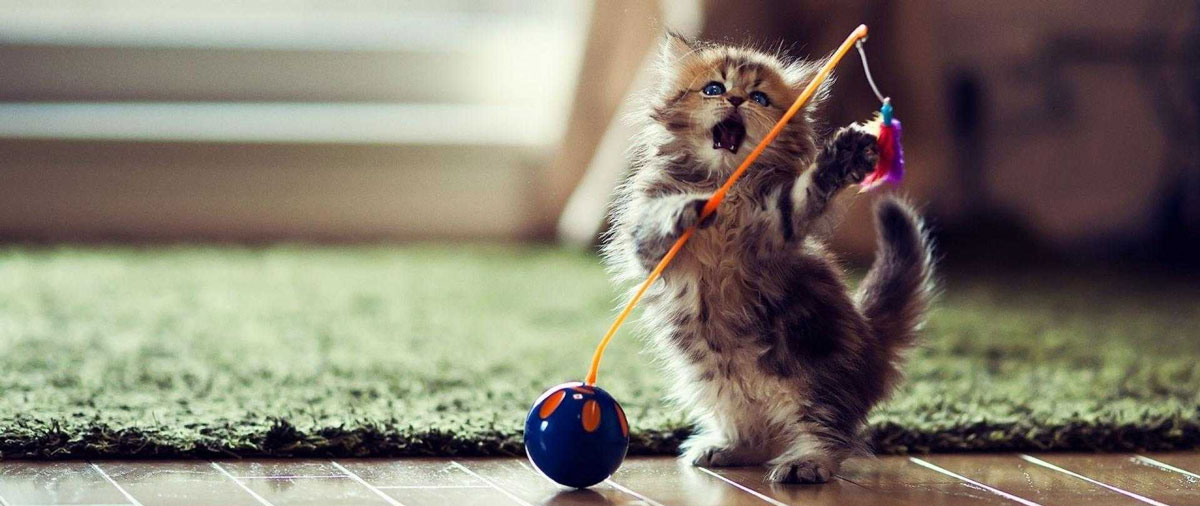 Cat Toys – The fun Stuff